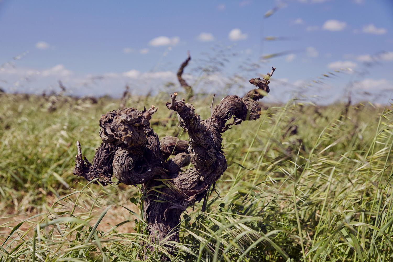 - 4Kilos wine - Emli Bendixen
