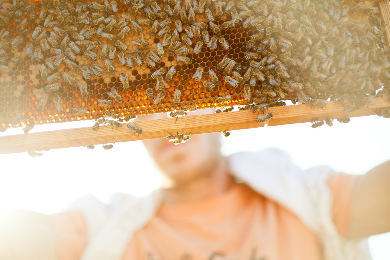 - Beekeepers on Kimolos - Emli Bendixen