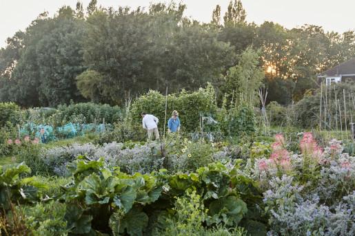 - Wilding market garden - Emli Bendixen