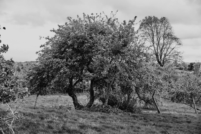 - Wilding cider - Emli Bendixen