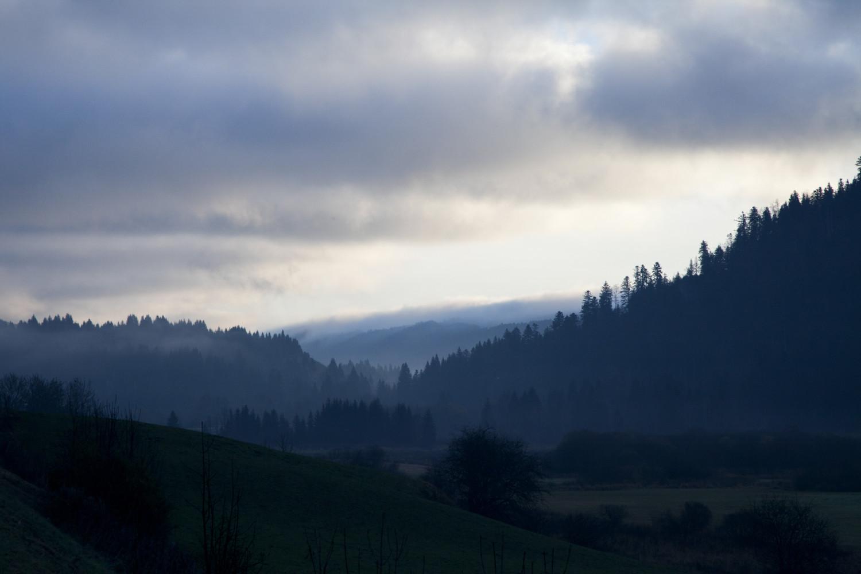 - Vacherin Mont D'or - Emli Bendixen