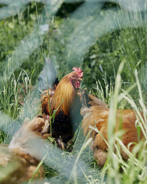 - Coombeshead Farm - Emli Bendixen