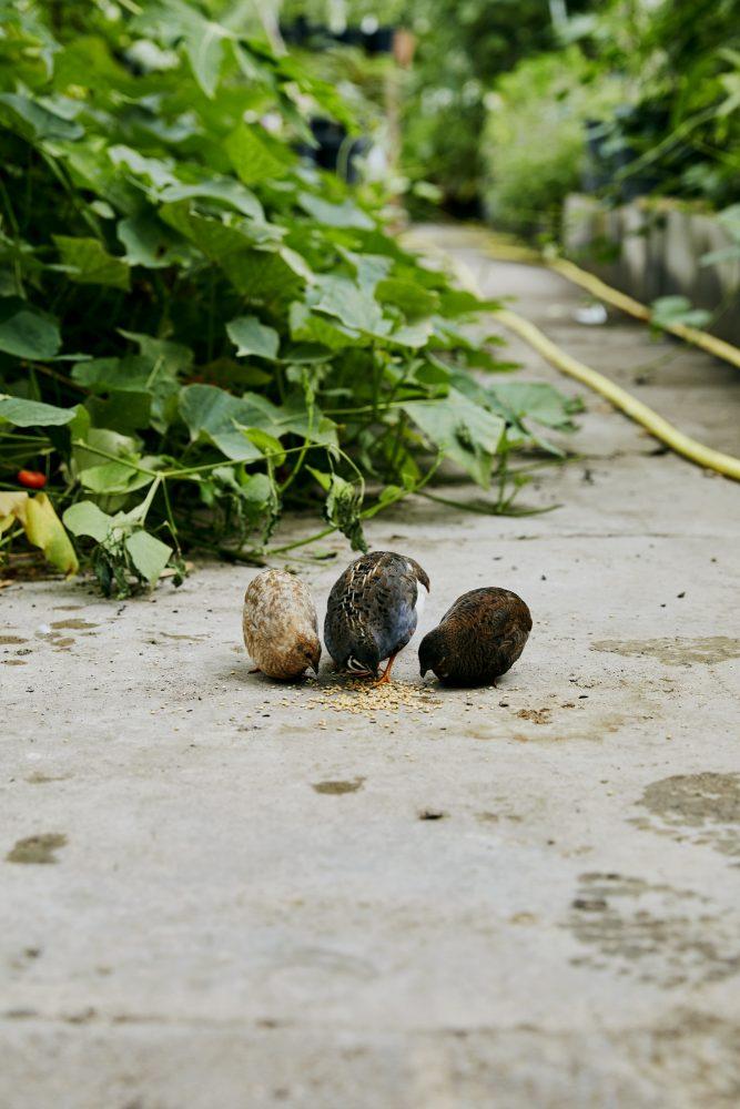 - Ryewater Nursery - Emli Bendixen