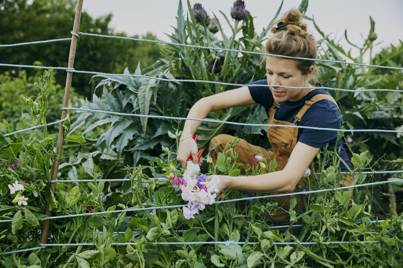 - Wilding garden - Emli Bendixen