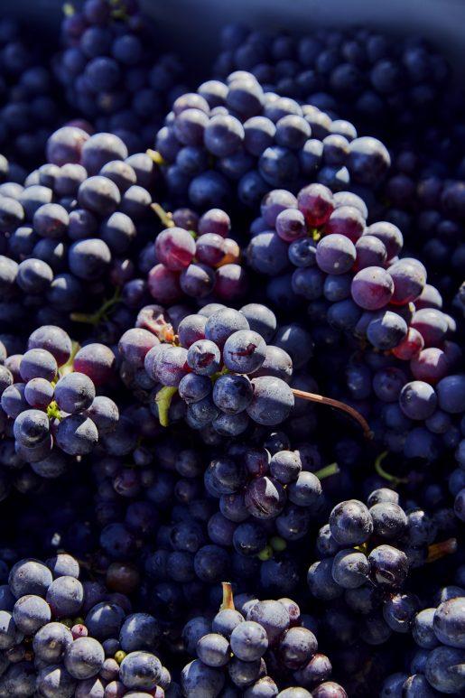 - Balfour wines - Emli Bendixen