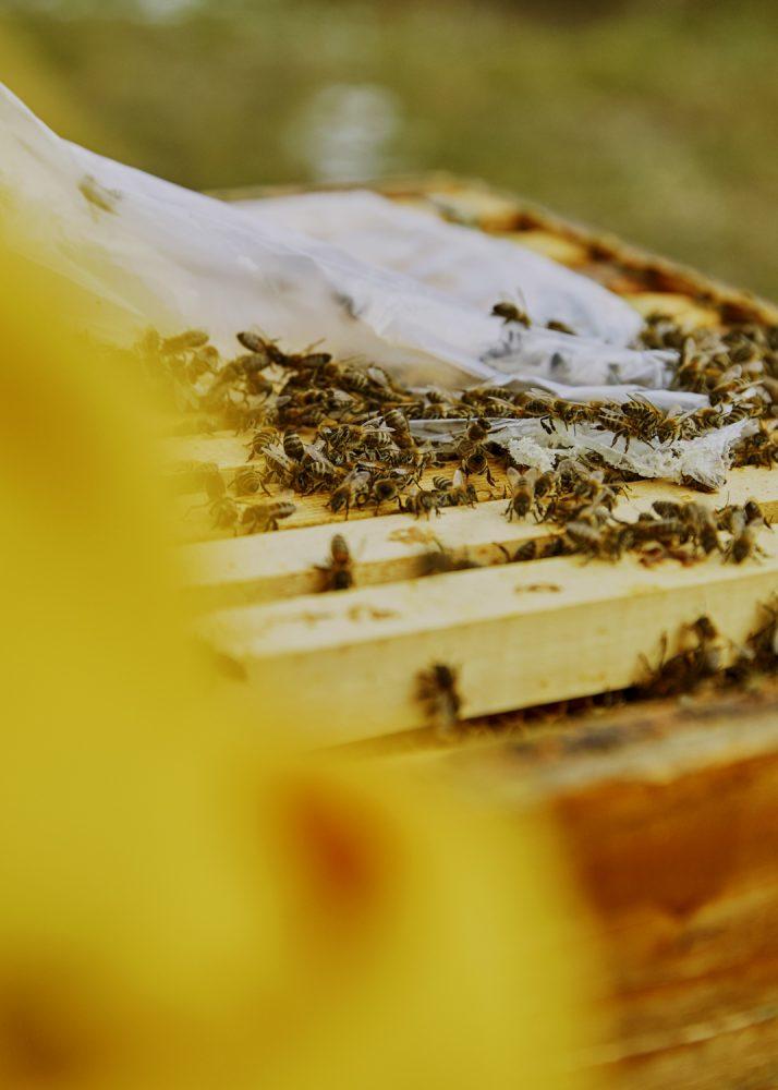 - Bees in Macedonia - Emli Bendixen